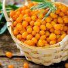 Sadzonka Orange Friesdorfer